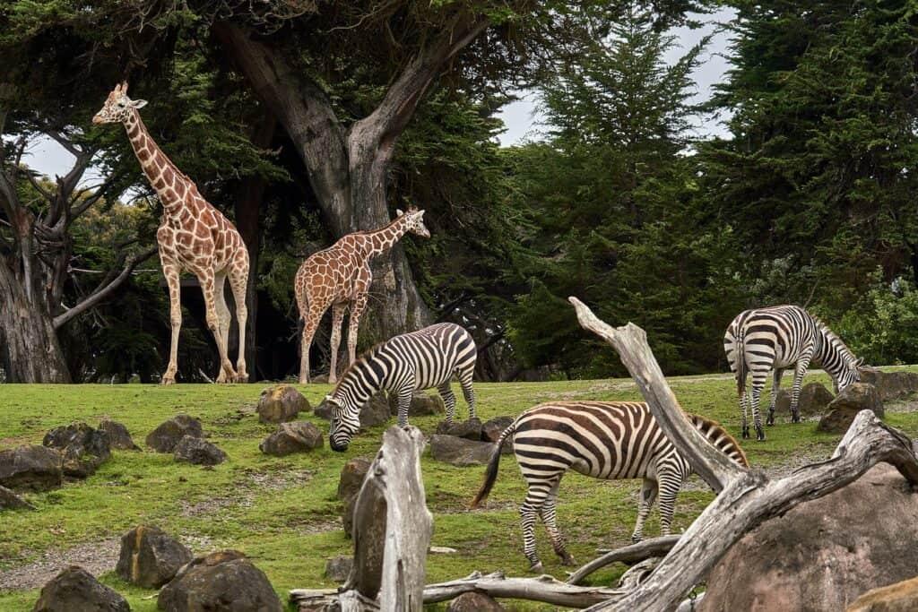 Tag i Zoo - ideer til daten